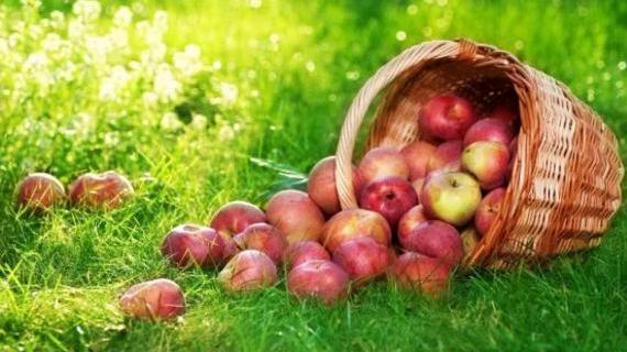 Чому Спас називають Яблучним?