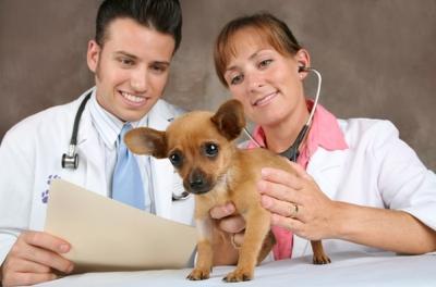 Ветеринарний фельдшер